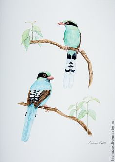 Common Green Magpie. Traditional art ( watercolor).  Svetlana Markina (LechuzaS) . Size: 21cm*30cm
