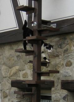 1000 images about kurs katzenbaum on pinterest garten search and cat trees. Black Bedroom Furniture Sets. Home Design Ideas