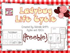 Life Cycle of a Ladybug (free; from Apples and ABC's)