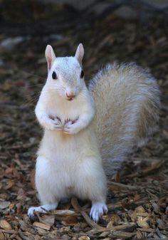 white squirrel <3