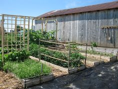 Wooden tomato cages attached to raised bed frames