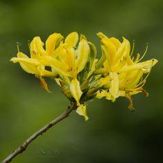 Yellow... - Moon-Photography
