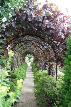 Garden and Home Garden Arches, Walkways, Vineyard, Pergola, Home And Garden, Outdoor Structures, Gardening, Gallery, Beautiful