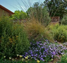 Deer grass: Give wildlife a snack and give yourself a break — this food-source grass is easygoing in many climates and conditions.