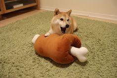 ふわもこ的 だいふクッキング | 柴犬だいふくオフィシャルブログ「読む だいふく ちゃんねる」Powered by Ameba