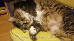 Cute and Funny Cat & Dog Clips and we got a Puppet !