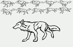 Image detail for -Basic Wolf Run Cylce. Tutorial. Animated by *RooksRooftops on ...