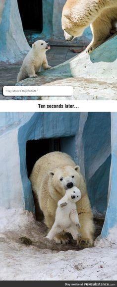 Disrespectful baby polar bear