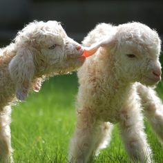 Spring's New Arrivals: Down on The Farm...