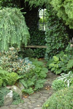 shade planting done right - small rhododendron with lovely tomentum, Brunnera, ferns, hostas, ivy, clipped box, conifers . . . from Danish blog HAVETID