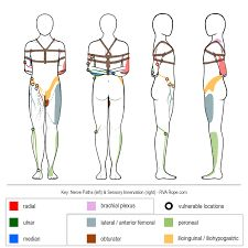 Nerve Compression Circulation Loss Generally speaking, circulation loss over a short period of time isn't a major concern, and neither is the discoloration that typically… Freaky Deaky, Rope Tying, Rope Art, Dominatrix, Tie Knots, Submissive, Kinky, Image, Haikyuu