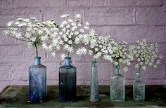 Queen Anne's Lace, Ammi majus, 2000 seeds, easy wildflower, cutting garden, wedding bouquets annual all zones, full sun, drought tolerant - Smart Seeds via Etsy.
