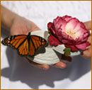butterfly release individual box wedding bride