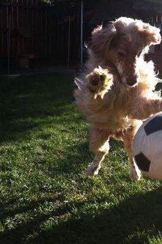 Uma boa brincadeira sempre faz bem à nossa saúde! Mexa-se! #Mexa-se #cachorro #brincadeira