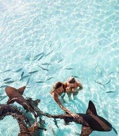 Swimming with sharks is at the top of our bucket list! What do you want to do with a bestie? | World Travel Tips and Tricks | World Travel Tips and Guide #travellers #worldtravellers #naturelovers #adventuretravel #adventuretime #places #travelmore #travelhacks #travellife #traveltips #destination #destinationguide