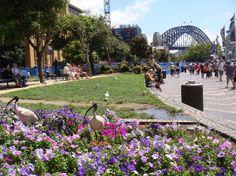 Circular Quay, #Sydney #Australia