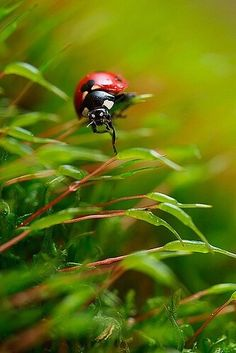 Through moss wood by Viand on DeviantArt Cool Bugs, Love Garden, Color Photography, Lady In Red, Beautiful Pictures, Cute Animals, Wildlife, Creatures, Ladybugs
