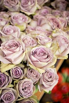 Antique purple roses - one of my favorites!