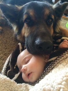 GSD~ Enough https://said...no one is going to hurt this little one!