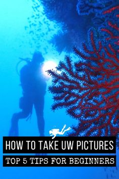 Are you tired of bringing back green pictures from your dives? Here my top 5 tips to start taking better pictures underwater today! #Scubadiving #UWPhotography #Underwater #Photography #Scuba #Diving Green Pictures, Cool Pictures, Photos Sous-marines, Best Waterproof Camera, Aquatic Ecosystem, Underwater Pictures, Shark Swimming, Snorkelling, Open Water