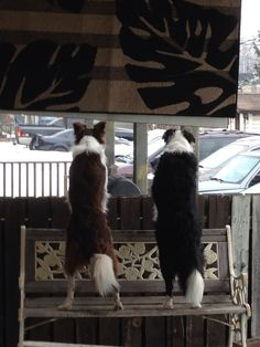 Is it greener on the other side. Or is that a squirrel. Border Collie Days.