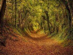 En souvenir de l'automne ... forêt Ashdown, dans le West Sussex, en Angleterre. Un tunnel végétal dans lequel on a envie de se perdre ...