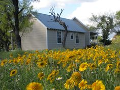 Made in the USA:  Native American Seed - Wildflowers and Native Prairie Grasses Eco-Tourism