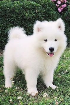 If one puppy can make you smile. What would 25 puppy pictures do? Find out with this crazy collection of some of the cutest pups ever! Cute Baby Puppies, Super Cute Puppies, Funny Puppies, Free Puppies, Puppies Puppies, Cute Funny Dogs, Cute Cats And Dogs, Cutest Dogs, Cute Puppy Pictures