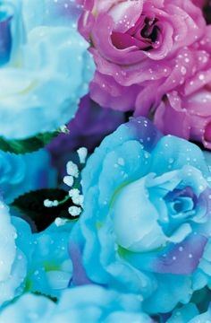 Mika Ninagawa- Love the teal & purple Pink Turquoise, Pink Blue, Teal, Aqua, Amazing Flowers, Beautiful Roses, Pretty Flowers, Cactus, Love Photos