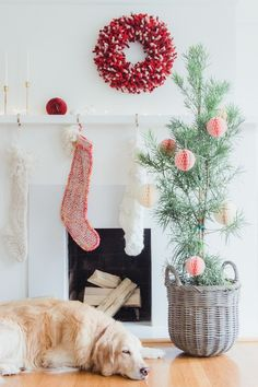 A Green Christmas in San Francisco | French By Design