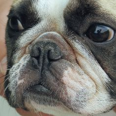 www.etsy.com/shop/tinybling.French Bulldog Jewelry for French Bulldog Lovers.
