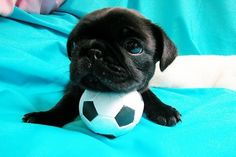 Cute puppy and soccer=doesn't get better!