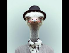 Zoo portraits: Animals in clothing