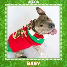 Cute Dog, Ugly Sweater