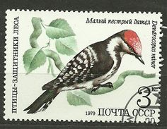ZSRR, 1979, Mi 4884, Lesser Spotted Woodpecker (Dendrocopos minor), #477, CTO