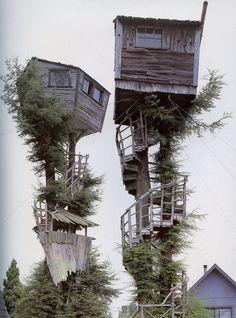 LOVE tree houses... definitivamente me encantaría vivir aquí!