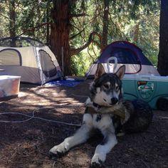 Camping at Idyllwild Dog Park! - Idyllwild, CA - Angus Off-Leash #dogs #puppies #cutedogs #dogparks #idyllwild #california #angusoffleash