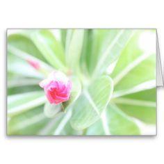 Waterfront Garden ~ 5x7 Folded Greeting Card.  La Paz, Mexico.  See more at www.zazzle.com/wheresqtraveldreams*