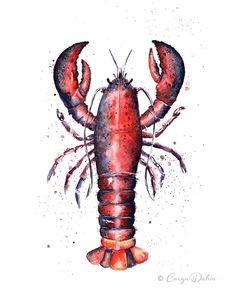 Lobster Art painted after a wonderful Summer with lots of time at the beach. purchase on https://www.etsy.com/listing/200005070/fresh-lobster-colorful-watercolor-print?