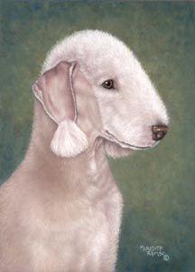 Pastel Portraits of Bedlington Terriers