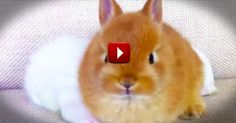 This is Silly, But I Cant Stop Watching! So Many Bunnies . . . So Much Cuteness! - Cute Video
