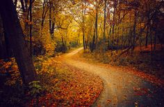 ***Autumn Path (Illinois) by Anthony Presley / 500px E
