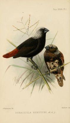 ser. 5, v. 4 (1886) - Ibis. - Biodiversity Heritage Library