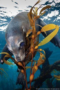 California Sea Lion www.flowcheck.es Taller de equipos de buceo #buceo #scuba #dive