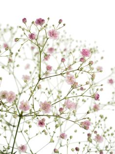Love delicate white waxflower and it has a great lemony