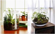 DIY - Jak zrobić ogród-terrarium? Terrarium, Diy, Garden, Home Decor, Blog, Flowers, Terrariums, Garten, Bricolage