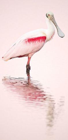 pink flamingo ✿⊱╮