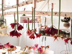 Creëer de perfecte kersttafel met de amaryllis