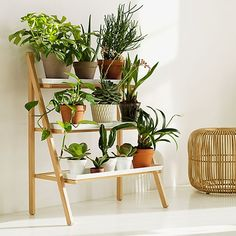 Pot Ladder by Kekkilä | MONOQI #bestofdesign