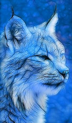 Winter Bobcat